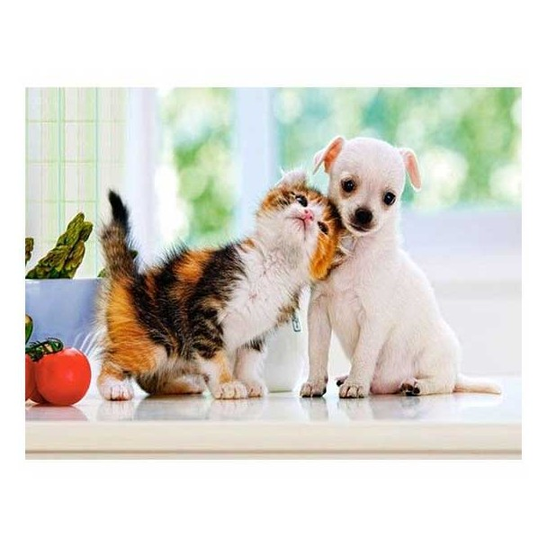Puzzle 500 Piezas Chihuahua Puppy and Kitten