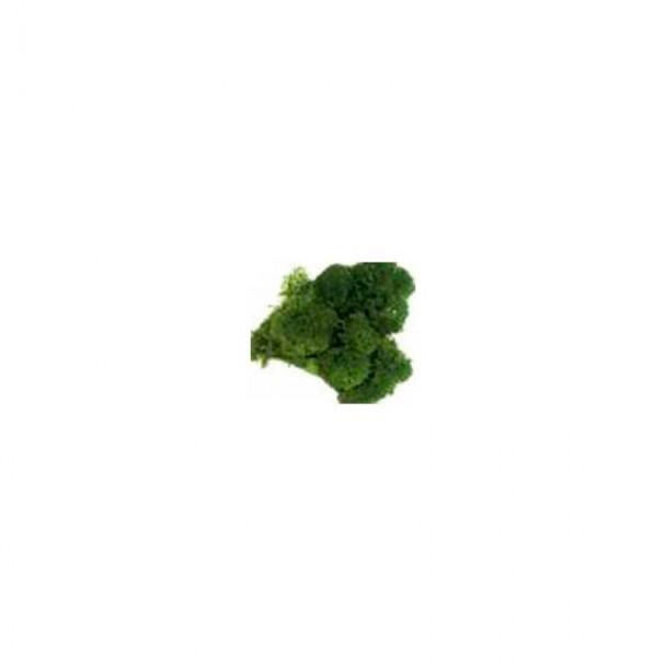 Musgo Verde Oscuro