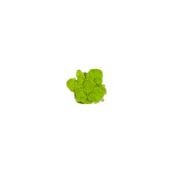 Musgo Verde Medio