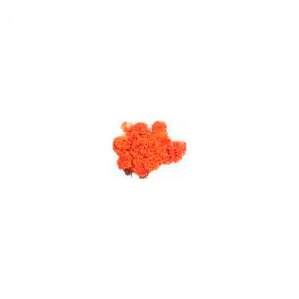 Musgo Naranja